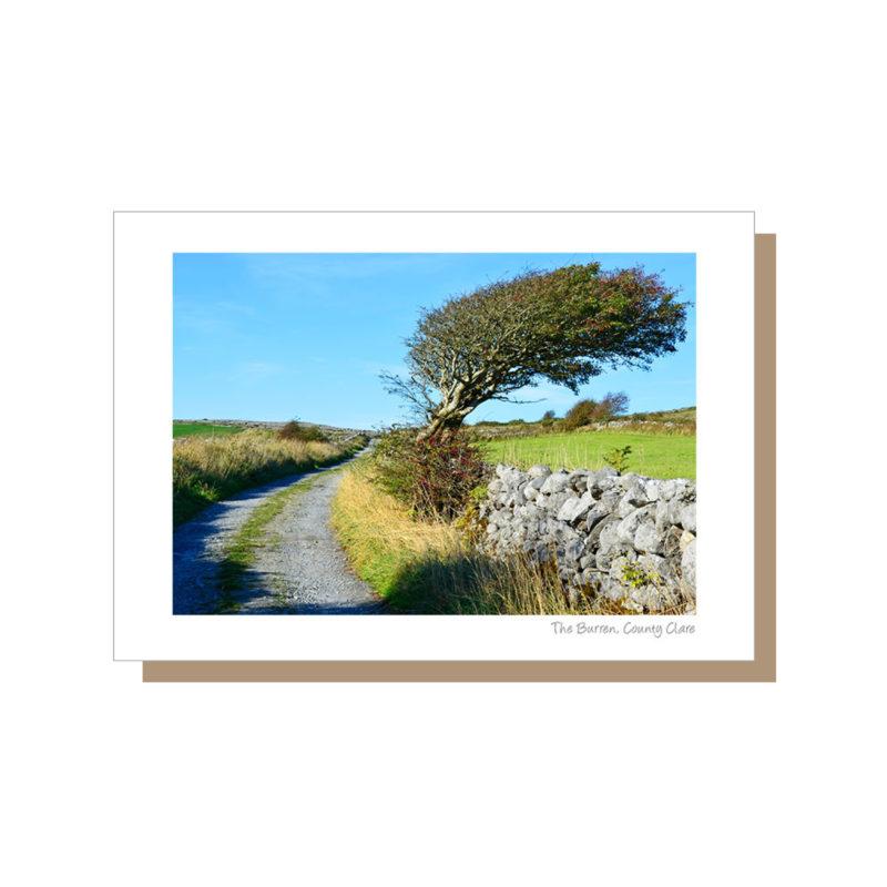 Tree in the Burren