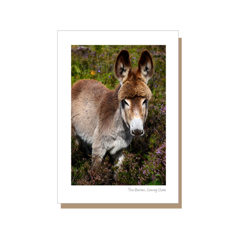 donkey in the west of Ireland