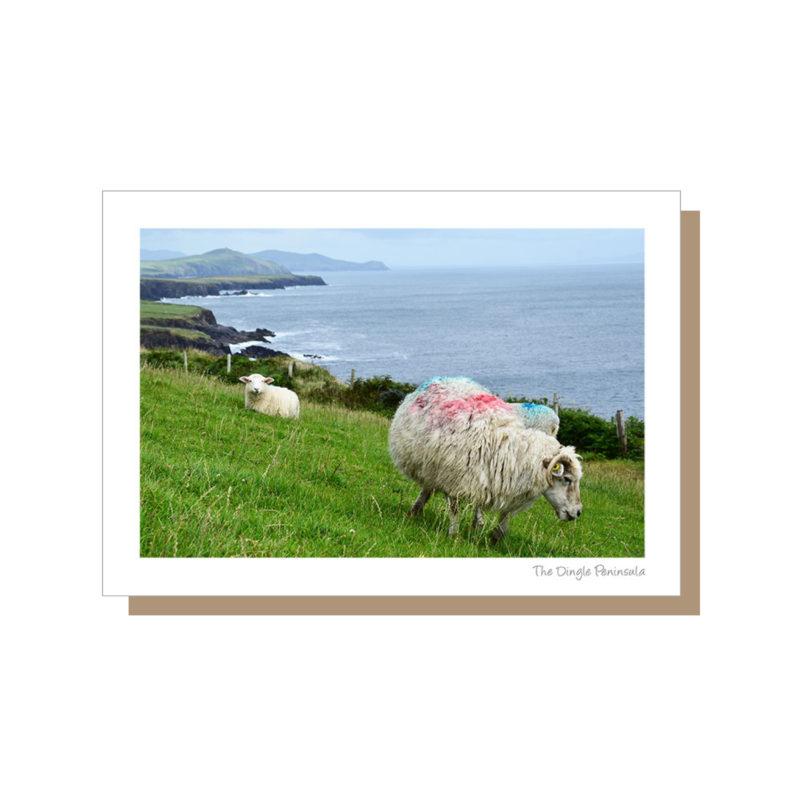 Sheep on the Wild Atlantic Way