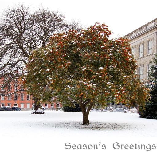 trinity college, dublin snow, dublin christmas, dublin christmas card, trinity college christmas card, made in ireland christmas cards, irish made christmas cards, corporate christmas cards