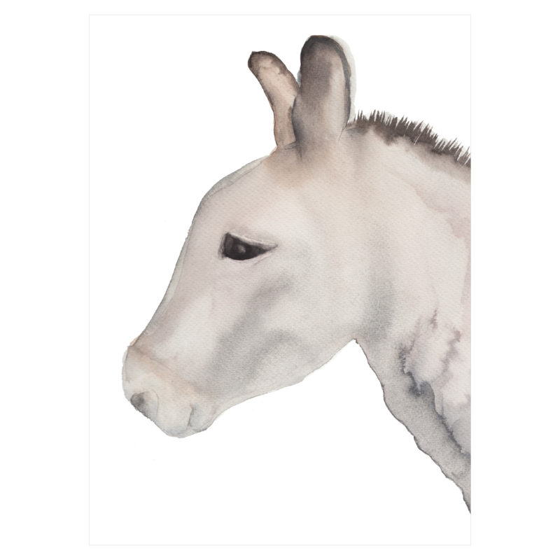 donkey by catherine dunne