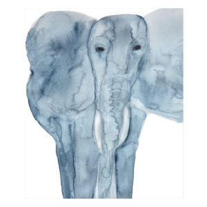 Elephant by Catherine Dunne