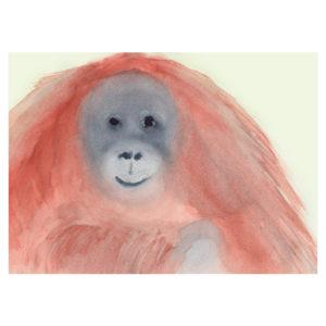 orang-utan by catherine dunne